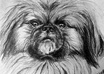 draw your pet portrait on paper with charcoal and pencil and will send it to you by mail, not digital small2