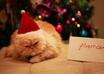 take a photo of my male persian cat with your message small2