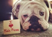take a picture of my female bulldog with your message small2