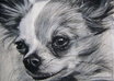 draw your pet portrait on paper with charcoal and pencil and will send it to you by mail, not digital small1