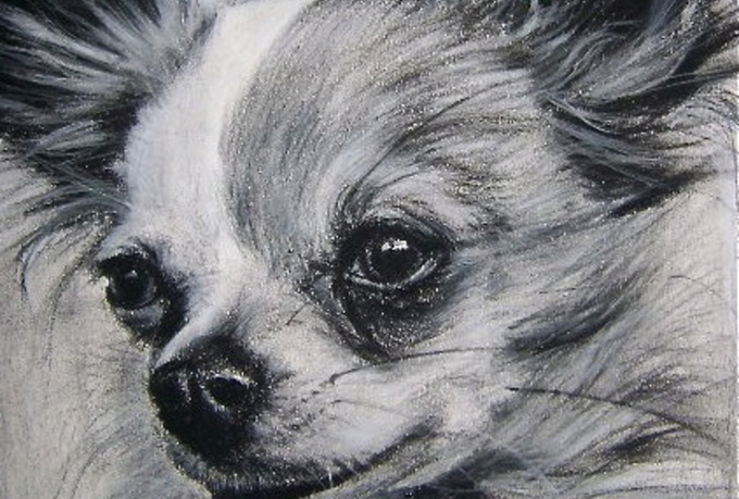 draw your pet portrait on paper w pencil and send it to you by mail, not digital