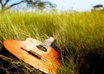 Guitar-in-grass