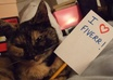 send you a unique picture of my cat holding a sign with your message on it, fun and cute small1