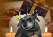 create a personalized video of my dog singing Happy Birthday to anyone you like small1