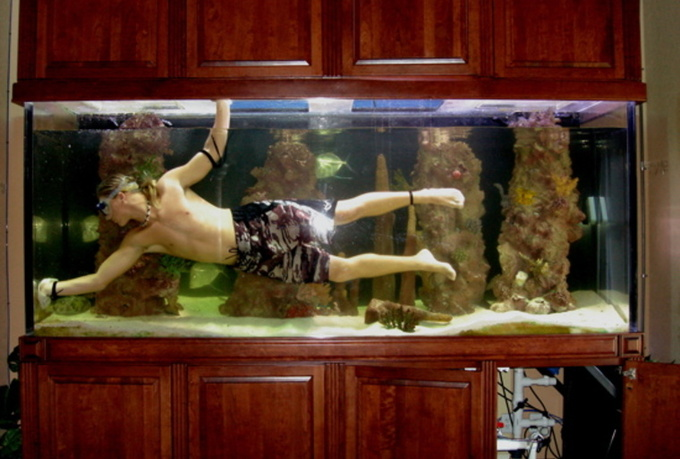 Fish tank care and maintenance yearly 2017 fish tank for Fish tank ice method