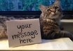 take a photograph of my cat with your message