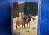 mail you 2 Elk luggage tags small1
