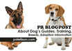 review your site or product on my PR0 Dog Lover blog, it will boost your serp on google